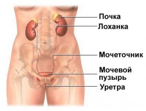Причины и симптомы проявления уретрита у женщин